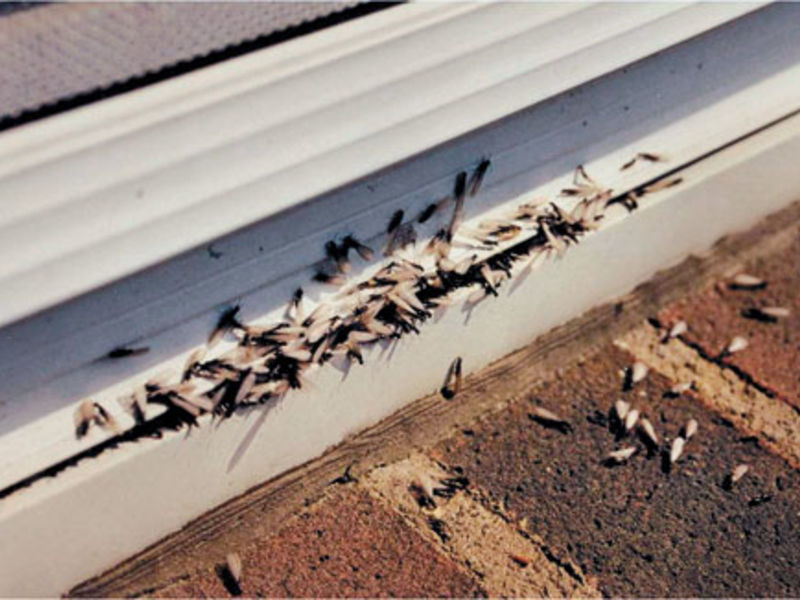 Termite Inspections – What is it?